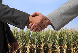 Business people shaking hands in front of a field